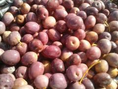 Olive Violette/Rose entière et tailladées BELDI