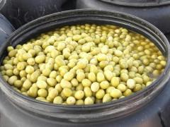 Olives verte entières et cassées BELDI