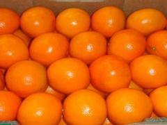 MANDARINE NOVA : EN BOITE DE 10 KG POIDS NET ET 117 BOITE / PAL STANDARD.