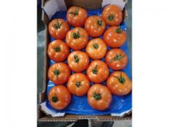 Tomate ronde, origine Maroc