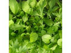 Salade Mesclun d'origine marocaine