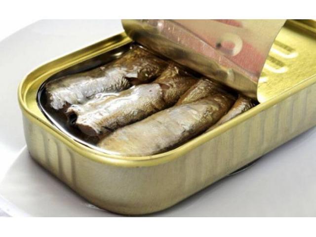 Conserves de Sardines origin Maroc