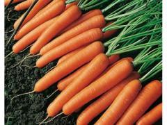 Carotte orange avec un goût sucré
