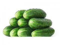 Concombre frais de couleur vert foncé