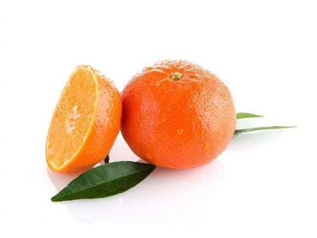 Tangerine nadorcotte production Marocaine