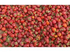Niora de couleur rouge de haute qualité
