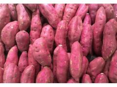 Patate douce sucrée du maroc