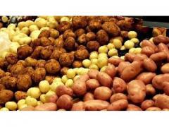Pomme de terre de très bonne qualité